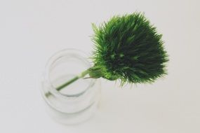 green beard carnation in a glass vase