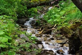 mountain stream in the forest in Switzerland