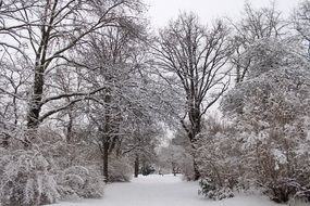 Snowy Trees at Park, winter landscape