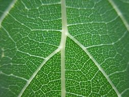 streaks on a green leaf close-up