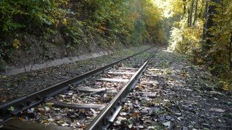 rails in the autumn forest