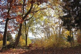 Autumn Forest Colorful