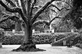 Black and white photo of the tree in the park
