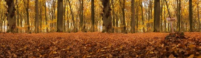 autumn forest in germany
