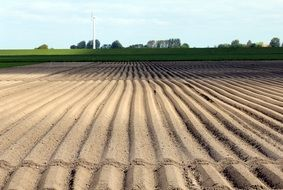 arable field for growing potatoes