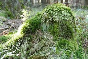 green stump in the forest