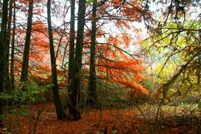 Autumn Forest Red Leaves landscape