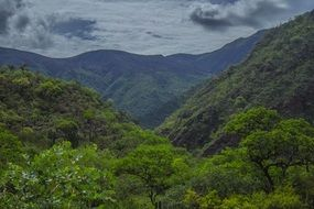 panorama of green jungle in the mountains of tenerife