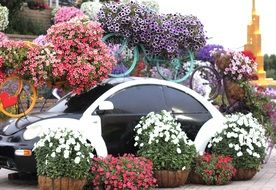 floral decorations in Dubai Miracle garden