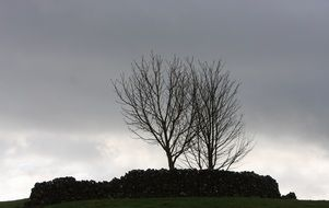 gloomy sky over tree silhouettes
