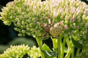 Macro photo of spider on a plant