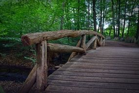 Wooden Bridge in a bright green forest