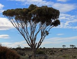 Trees in the outback in Australia