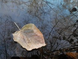 dry autumn leaf floats in the river