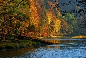 colorful Autumn forest lake view