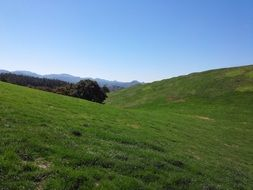 panoramic view of the endless green fields