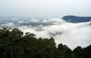 panorama of green forest in the clouds in the mountains of the western ghats