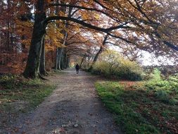 autumn Forest path view