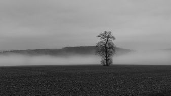 lonely tree in Fog Colourless Landscape