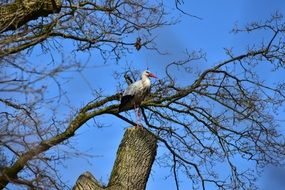 stork on a tree against a blue sky