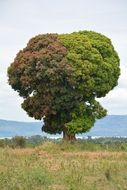 Tree Nature,Africa Tanzania
