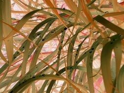 colorful Autumn Grass close up