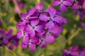 stunning Flower Purple