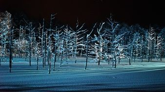 Blue frozen Trees night Forest view