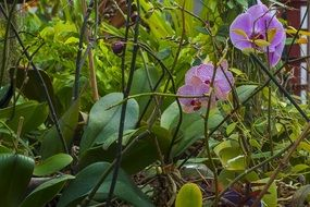 purple orchid among greenery