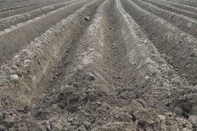 rural field tillage