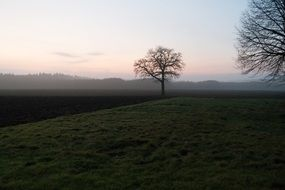 tree among arable land in the morning haze