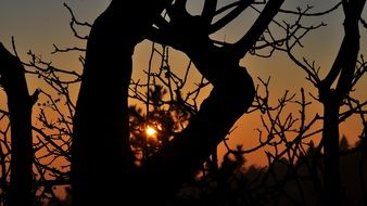 Sunset in Tree branches evening view