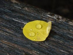 yellow Leaf with water drop