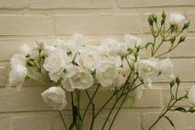 bunch of White Roses at Wall