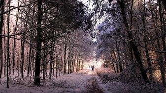 Snow Winter Forest path Landscape
