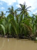 palm trees in Mekong river