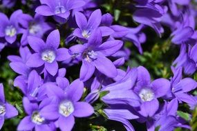small purple flowers in spring