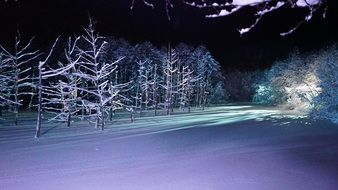 Frozen Forest night view