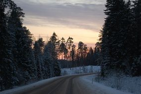 winter road along a dense forest