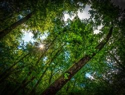 the sun\'s rays through the leaves of trees