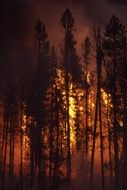 distant view of a forest fire behind trees