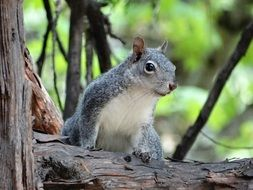 Squirrel in a national park