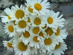 lush bouquet of white daisies