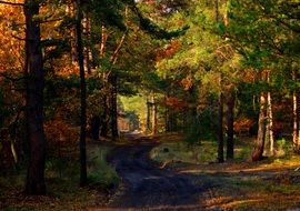 forest road among autumn trees