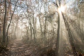 rays of the sun and morning fog on a forest trail