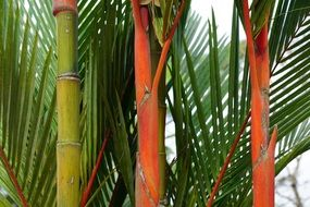 orange and green bamboo stems