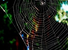 Big spider cobweb in nature