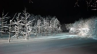 Snowy Trees Forest landscape