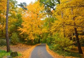 road in the forest in the colors of golden autumn