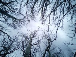 Trees Sky Branches Winter Blue